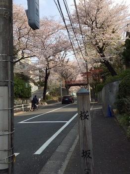 sakurazaka2.JPG